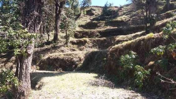 Property in mukteshwar