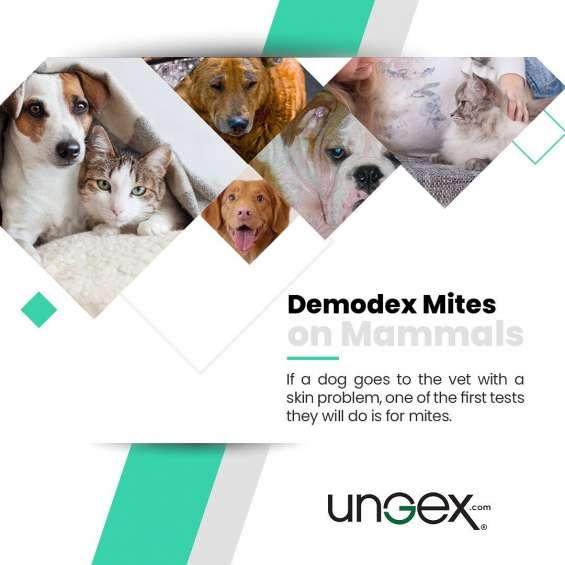 Demodex mite on mammals